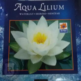 Водна Лилия - Бяла